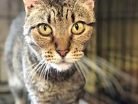Kashi's story Kashi was adopted from Fancy Cats along