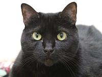 My story I am a talkative, friendly kitty. My previous