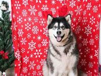 KATARRA's story I am 10 years old & I am a good dog. I