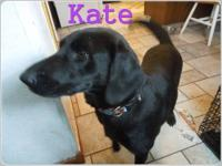Kate is a 2 year old Black Lab mix. This is momma girl
