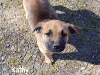 Katie and Kathy are a pair of adorable black mouth cur