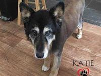 Katie (Courtesy Post)'s story Katie, the 13 year old