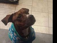 Katie's story Katie is a Brindle mix with a huge heart,