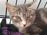 Katie is a sweet young lady who is looking for a home.