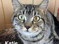 Katie's story Our pets are spayed/neutered and current
