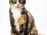 Katniss's story My adoption fee is $50.00, which