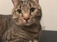 Meet Katniss!! A sweet 6yr old kitty looking for her