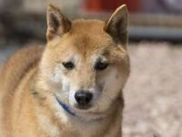 Kato's story Kato is a shy boy. When he is approached,