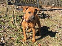 Kay's story Kay is a female pit bull terrier/coonhound