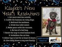 Kayleb's story !!! AVAILABLE for Adoption at ACCT