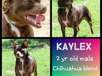 My story Kaylex needs a home with no chickens, he warms