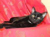 My story Keelan is a 6 month old, spayed female, black