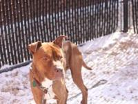 Keelo's story !!! AVAILABLE for Adoption at ACCT Philly