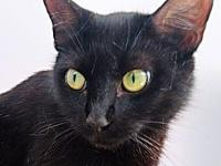Keeva's story Keeva is a female black cat, born on May