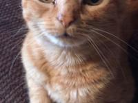 . KeKe is a darling orange male tabby who is good with