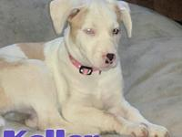Keller's story Keller is a 4 month old, female,