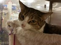 Kelly is a two-year-old female tabby cat. She is laid