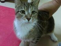 Kelsey is a young FIV+ girl who is friendly with both