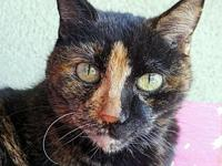 Kendra's story Very sweet senior girl who is declawed
