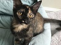 Kennedy's story Kennedy is a gorgeous tortoiseshell