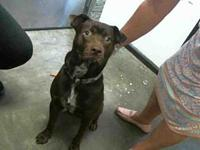 KENNEDY's story City of Tulsa Animal Welfare Tuesday