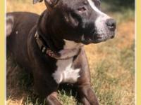 Kennedy is a 2-3 year old pit mix that was rescued from