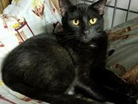 Kenny is a young male with a shiny, sleek black coat,
