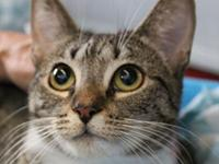 My story I came to Cat Depot from Animal Services. I'm