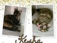 Kesha's story   Zoi's Animal Rescue Save a Life.. Adopt