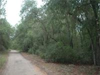 PRICED TO SELL!! Over 10 acres, right off the pavement,