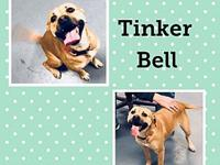 KGAC Shelter TinkerBell's story You can fill out an