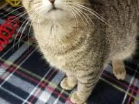 My adoption fee is $90 which covers my; spay/neuter,