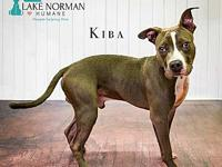 Kiba's story Kiba is an 8 month old male pit mix.