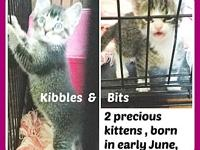 kibbles & bits's story These two little sweethearts