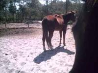 she is a trail horse for any one.she is 18y/o i am