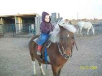 Kids horse. Gentle. No problems. call for more info