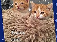 Kiera and Nala's story These two little ladies are