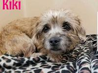 Kiki's story Kiki is a beautiful little one ready to