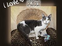 Kiki's story You can fill out an adoption application