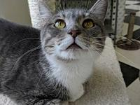 Kiki's story This sweet cat will win you over! Nice and