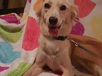 Kiki's story Hi I'm Kiki! I am a medium sized doggie