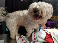 Kiki's story At Wags and Whisker's Pet Rescue: