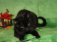Kiki (Spayed & Combo Tested)'s story Kiki is a