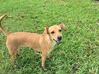Kiki's story Kiki is a one year old terrier mix. She is