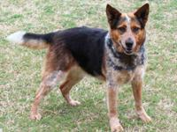 Looking for a beautiful, calm, loving companion? Look