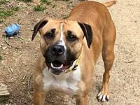 Kimba's story Kimba is a sweet 3 yr old hound boxer