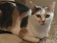My story Kimber is a mama cat who was surrendered