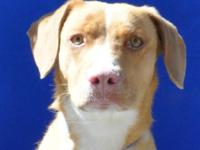 I'm Kimber a 10 month old Lab/hound mix girl who loves
