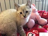 Kimberly's story Kimberly is a 10 week old female