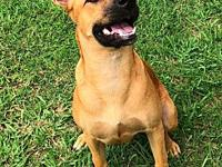 KIMMIE's story Kimmie is 8 months old. Sweet and loves